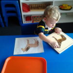 Montessori student learning about zoology